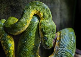 PySpot: Python Scripting Library